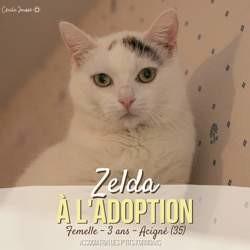 Zelda, Chat à adopter