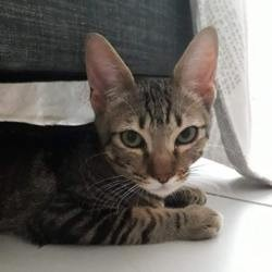 Spider, Chaton à adopter