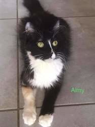 Aimy, Chat à adopter