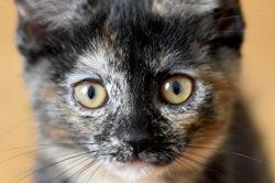 Sue, Chaton à adopter