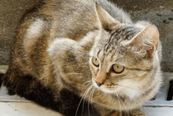 Charley, Chat à adopter