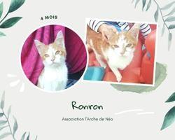 Ronron, Chaton à adopter