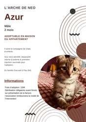 Azur, Chaton à adopter