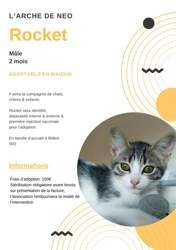 Rocket, Chaton à adopter