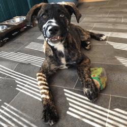 Sookie (réservée !), Chiot à adopter