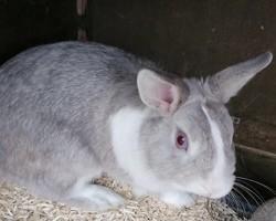 Guizmo, Animal à adopter