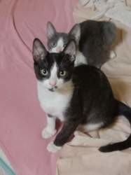Ad, Chaton à adopter