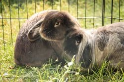 Courgette et chewie, Animal à adopter
