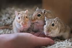 Claquette, chaussette et socquette, Animal à adopter