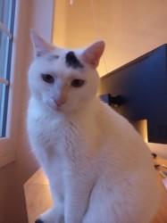 Kyo, Chat à adopter