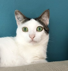 Mambo, Chat à adopter