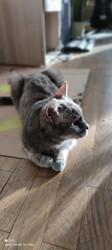 Minoushka, Chat à adopter