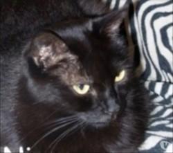 Ninou, Chat à adopter
