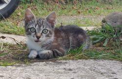 Grisou, Chaton à adopter