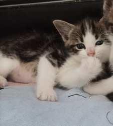 Mowgly, Chaton à adopter