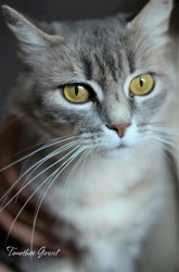 Ally, Chat à adopter