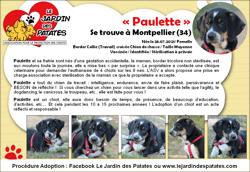 Paulette, Chiot border collie à adopter