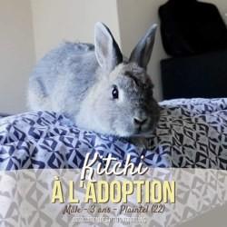 Kitchi, Animal à adopter