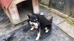 Taiga, Chien à adopter