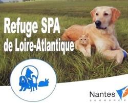 Refuge S P A De Loire Atlantique Refuge Animaux Loire Atlantique
