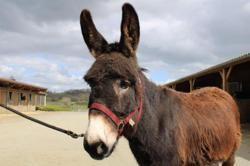 Cesar, Animal ane à adopter