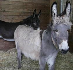 Kiwano, Animal ane à adopter