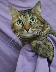 satine pot de colle chat europ 233 en 224 adopter dans la r 233 gion ile de