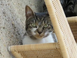 Imail, Chat europeen à adopter