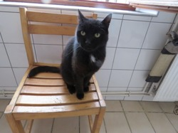 Don, Chat europeen à adopter