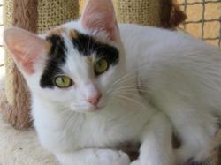 Candy, Chat europeen à adopter