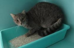 Byzance, Chat europeen à adopter