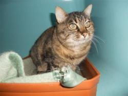 Olga, Chat europeen à adopter