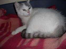 Naomi, Chat europeen à adopter