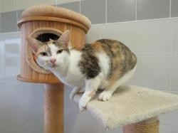 Berry, Chat europeen à adopter