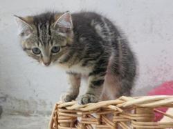 Kiwi, Chaton europeen à adopter
