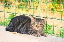 Mouki (réservée) , Chaton europeen à adopter