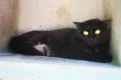 Orma, Chat europeen à adopter