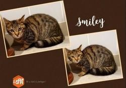 Smiley (réservée), Chaton europeen à adopter