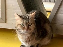Melba, Chat europeen à adopter