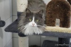 Caresse, Chat europeen à adopter