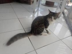0 corail, Chat europeen à adopter
