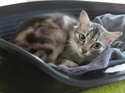 Marie, Chat europeen à adopter