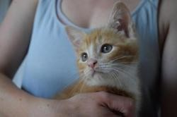 Roumy, Chaton europeen à adopter