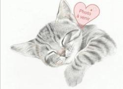 Xana, Chat europeen à adopter