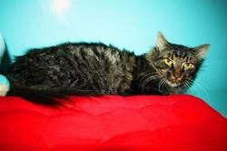 Poter, Chat europeen à adopter