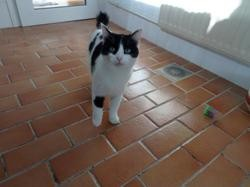 Yenne, Chat europeen à adopter