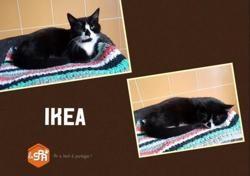 Ikea, Chat europeen à adopter