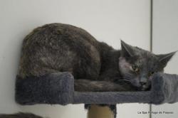 Nala, Chat europeen à adopter