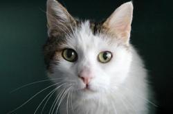 Salami, Chat europeen à adopter
