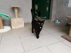 Zora, Chat europeen à adopter